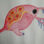 Daphnia by Julia Soroka, Dryden High School, Dryden, New York
